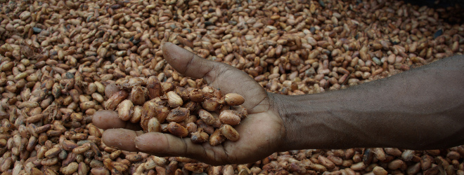 Investment Opportunities in Ghana: Cocoa Farming Project