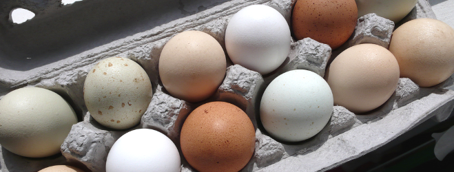 Investment Opportunity in Haiti - Egg Packaging Manufacture