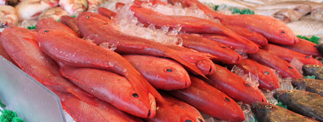 Fish Trading Start-Up Raising Funds to Expand across Kenya