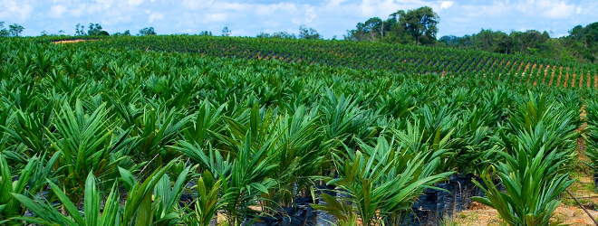 Palm Oil Producer in Ghana Looking for a Business Loan to Expand