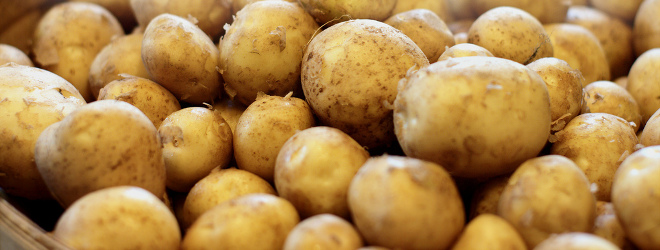 Potatoes - Farming Project in Sudan