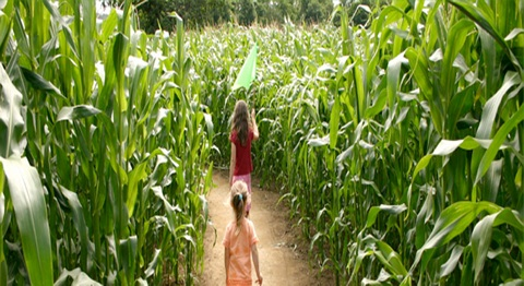 Corn farm in Northern Cameroon seeks for an investor