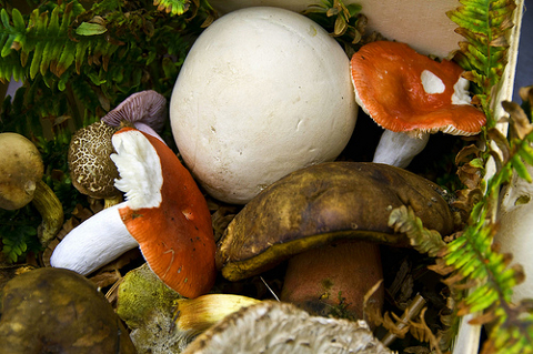 Examples of different edible mushrooms
