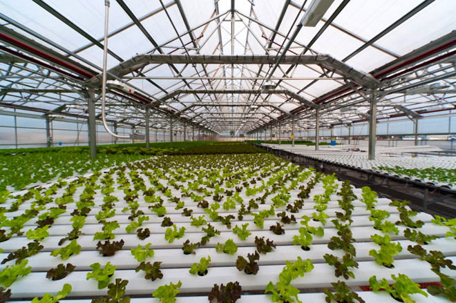 Investor for Hydroponics Agriculture Project in the Philippines